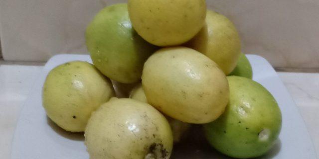 Ada Lemon yang Keren Untukmu